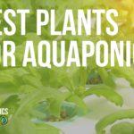 best plants for aquaponics