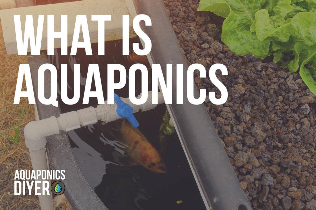 what is aquaponics